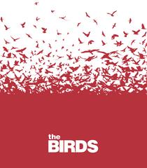 Uploads 2f1589906711644 b8bmkux6dl5 e859f0baba1e86ff4a8f8b3aa83b22a8 2fbirds12